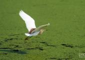 Птица над прудом