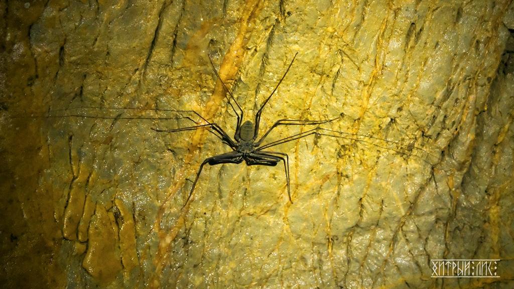 Паук в пещере