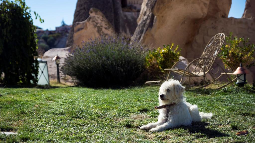 Собачка на лужайке