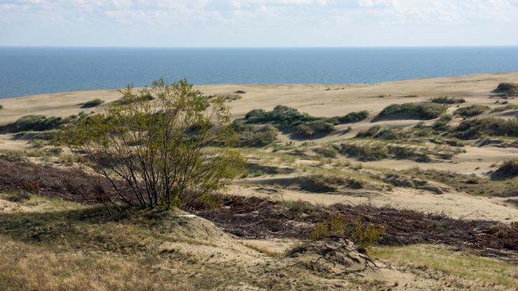 Дюны и Куршский залив