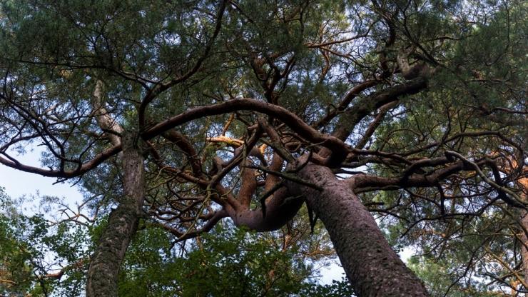 Сплетение ветвей