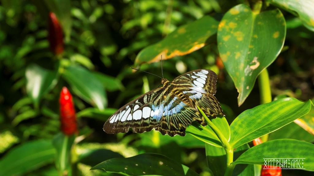 Парк бабочек 1