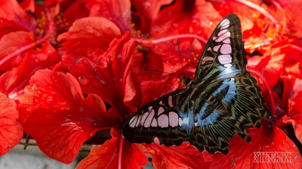 Парк бабочек 2