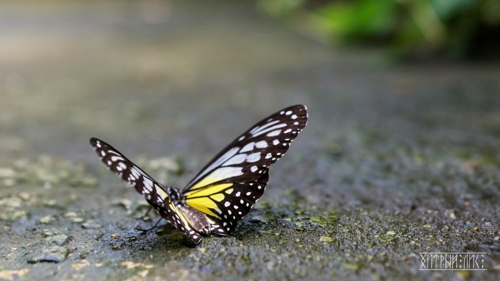 Парк бабочек 3