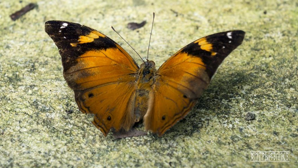 Парк бабочек 4