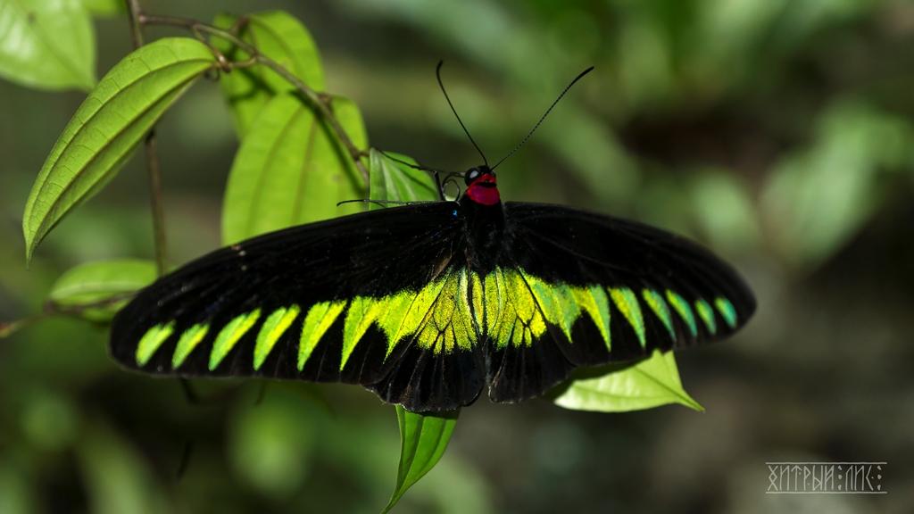 Парк бабочек 6