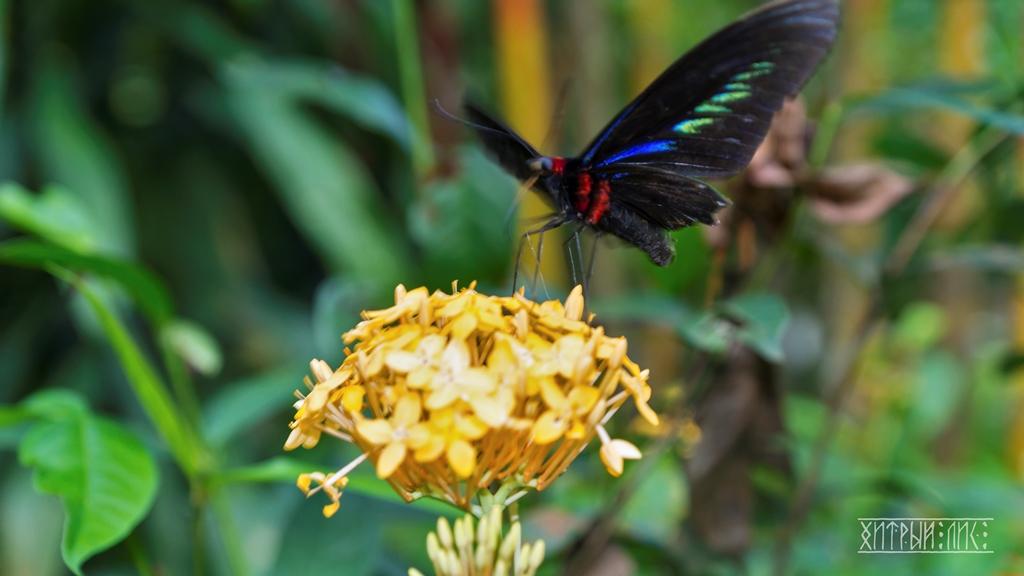 Парк бабочек 7