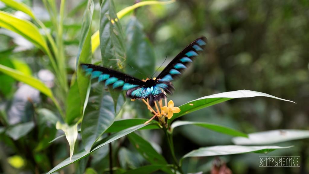 Парк бабочек 8