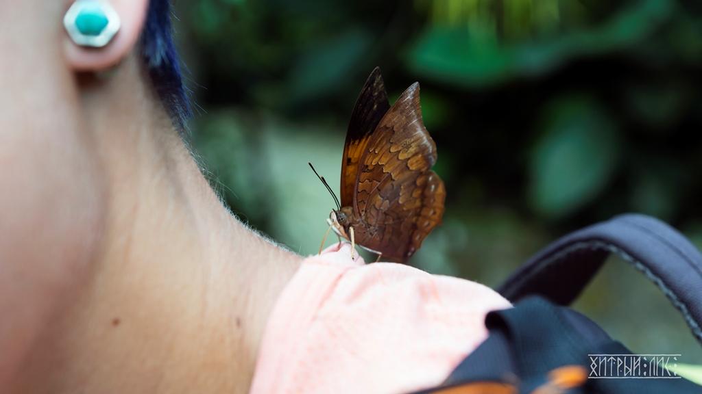 Парк бабочек 9