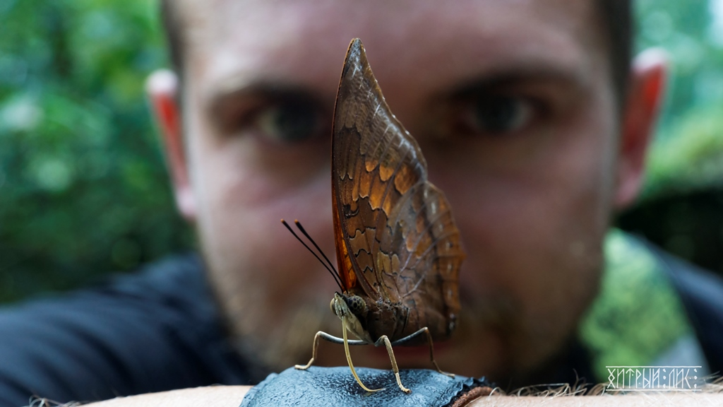 Парк бабочек 13