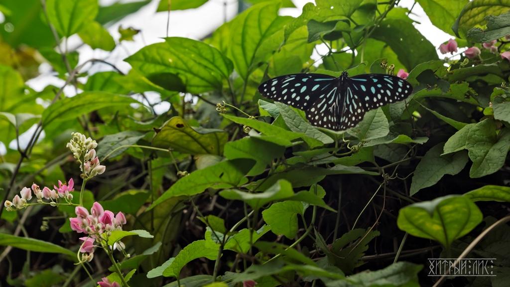 Парк бабочек 15