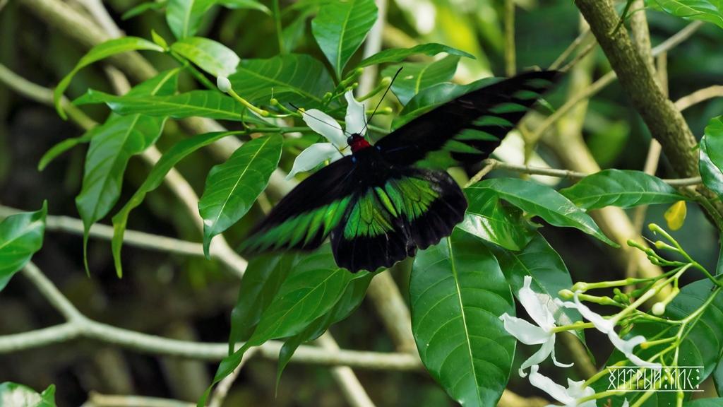 Парк бабочек 16