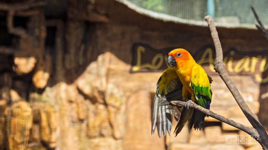 Парк птиц 1