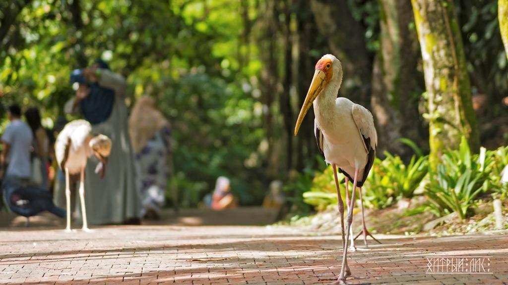 Парк птиц 3