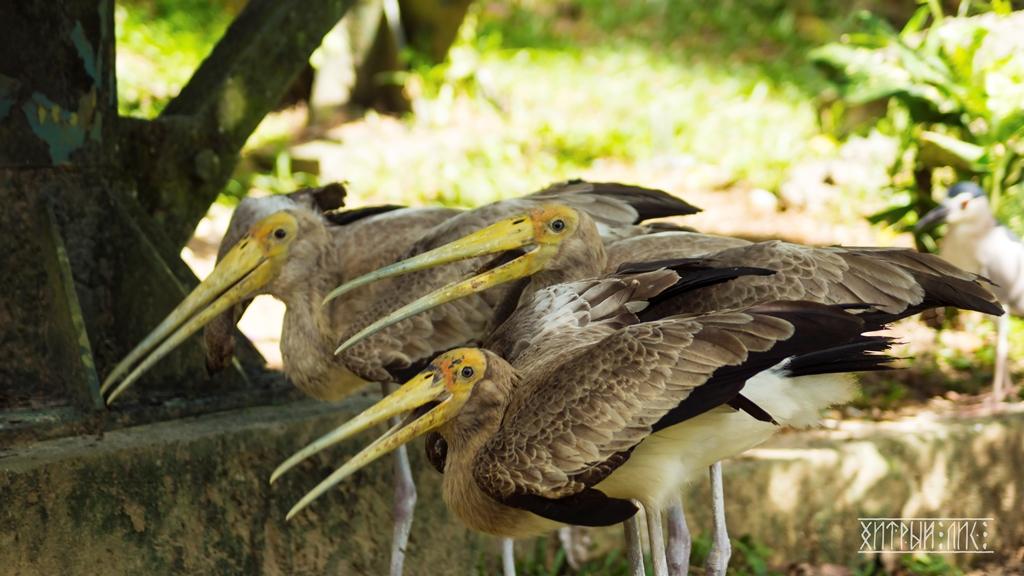 Парк птиц 5