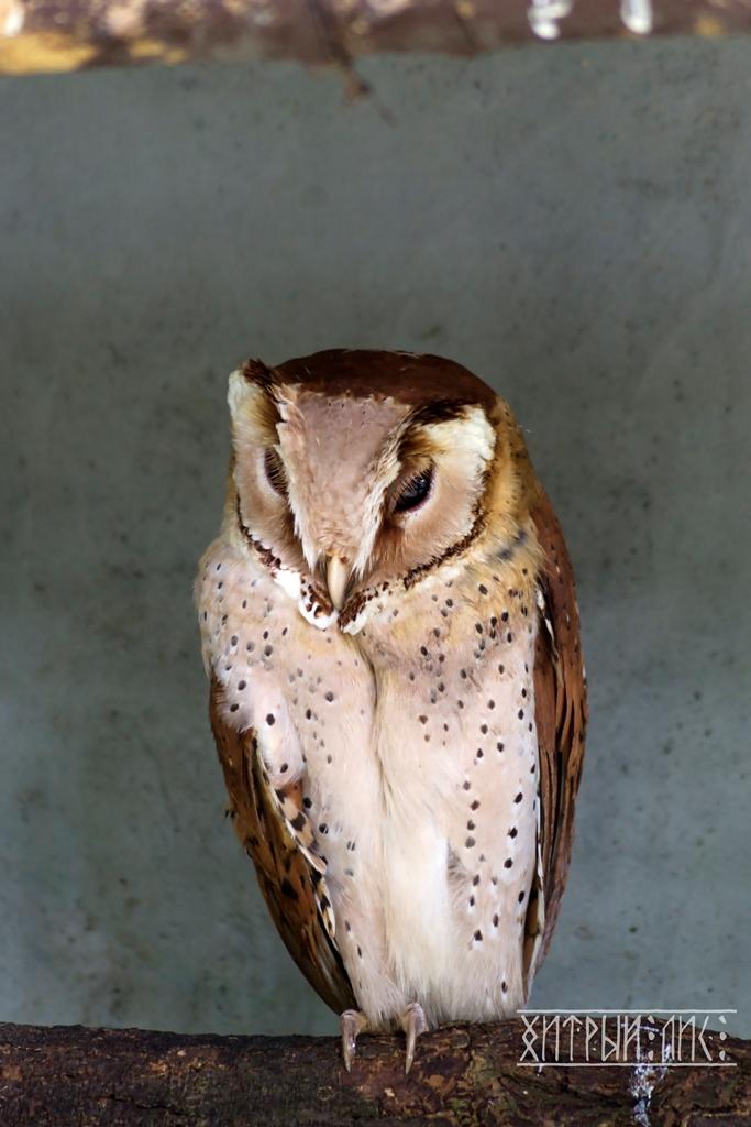 Парк птиц 10