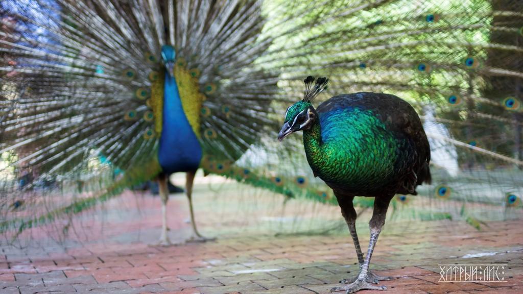 Парк птиц 13