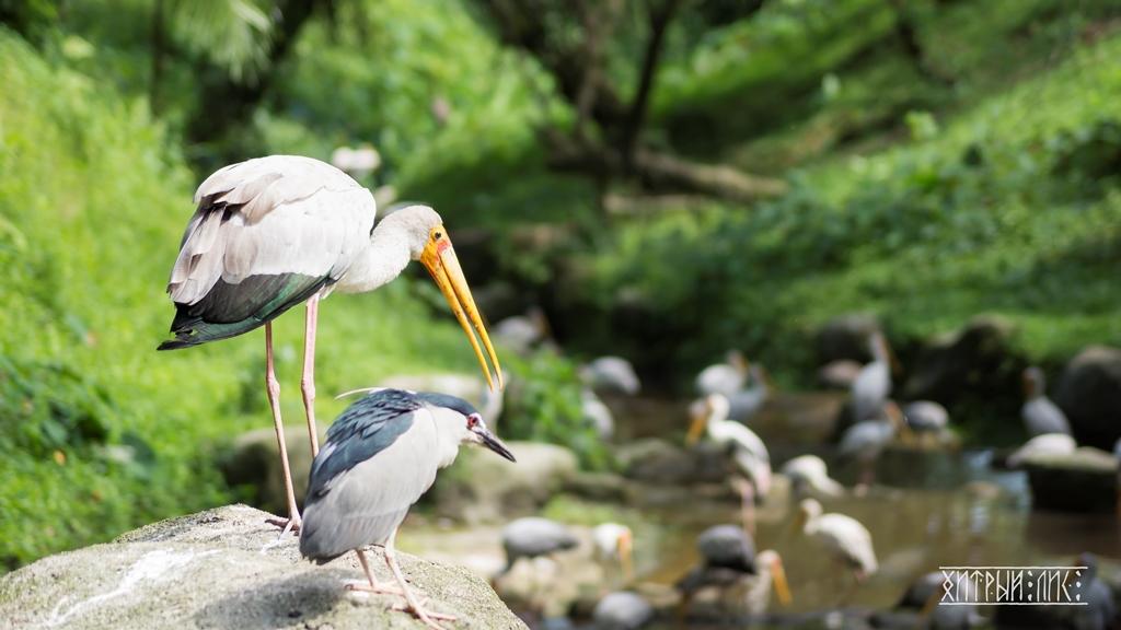 Парк птиц 15