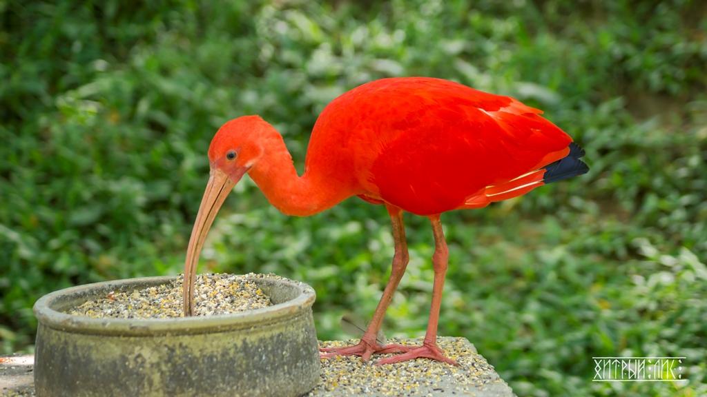Парк птиц 16