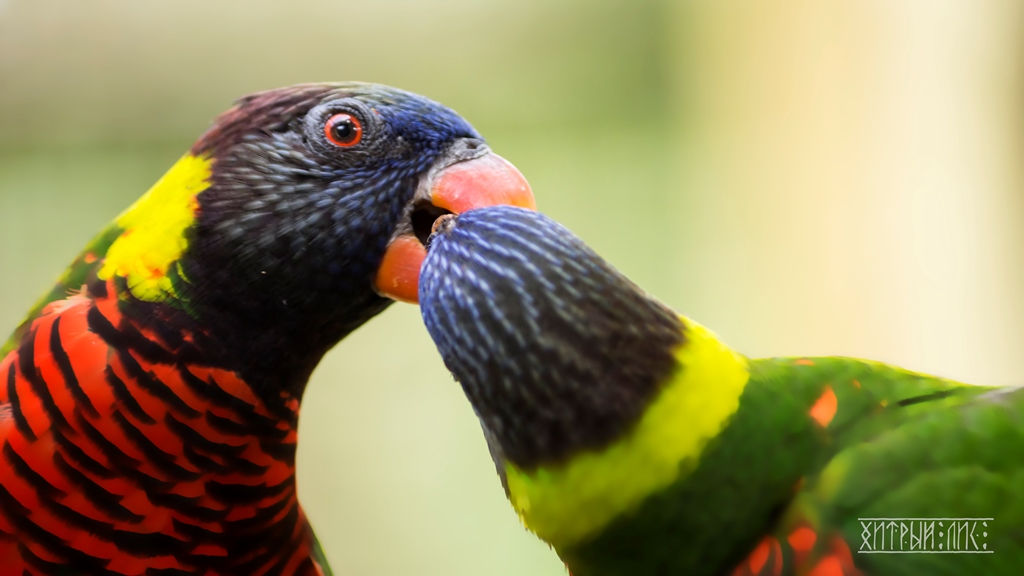 Парк птиц 23
