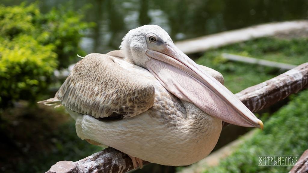 Парк птиц 24