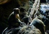 Tham Khao Luang cave 2