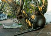 Парк Phra Nakhon Khiri 6