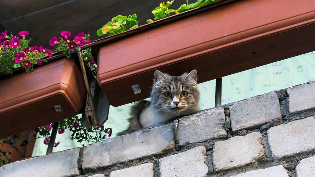 Сортавала. Кошка на балконе
