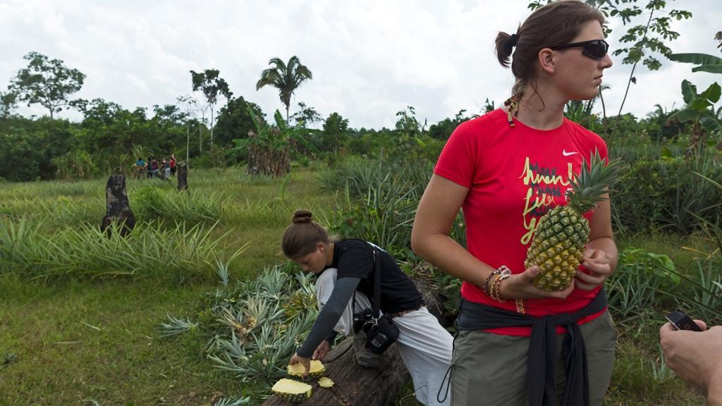 На плантации ананасов