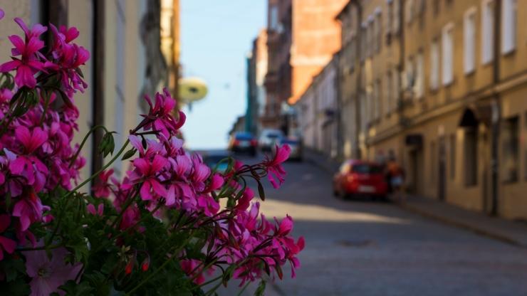 Цветы на улицах Выборга 1