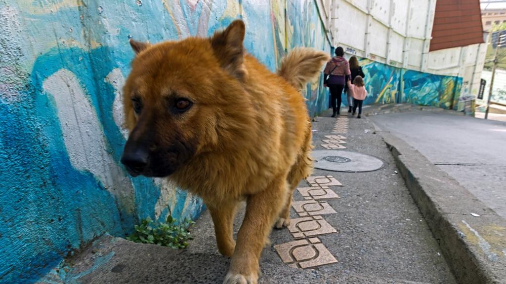 Собака и граффити